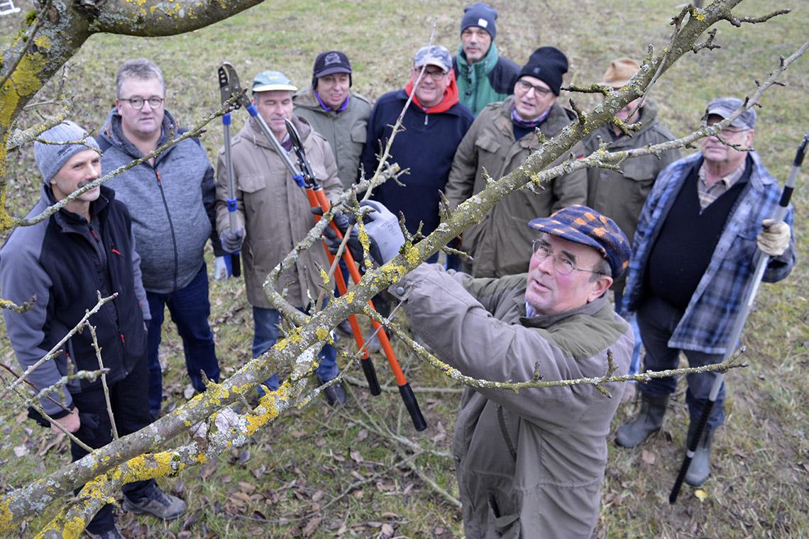 Read more about the article Gut abgeschnitten beim Baumschnittkurs